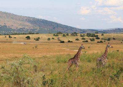 joanne-silver-souljourn-rwanda-retreat-2018-safari